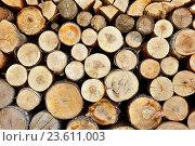 Купить «Pile of stacked round firewood prepared for fireplace and boiler», фото № 23611003, снято 5 мая 2016 г. (c) Зезелина Марина / Фотобанк Лори
