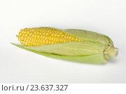 Купить «Спелый початок кукурузы на белом фоне», фото № 23637327, снято 19 сентября 2016 г. (c) Елена Коромыслова / Фотобанк Лори