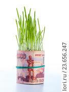 Купить «Рост денег: пятитысячные купюры зеленая трава. Финансовая концепция», фото № 23656247, снято 29 февраля 2016 г. (c) Pavel Biryukov / Фотобанк Лори