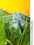 Купить «Стодолларовые купюры в зеленой траве», фото № 23656263, снято 2 марта 2016 г. (c) Pavel Biryukov / Фотобанк Лори