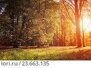Купить «Autumn colorful landscape view of sunny autumn forest», фото № 23663135, снято 4 октября 2015 г. (c) Зезелина Марина / Фотобанк Лори