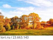 Купить «Sunset autumn view of autumn park lit by sinlight. Autumn nature landscape-yellowed autumn park in autumn sunlight», фото № 23663143, снято 4 октября 2015 г. (c) Зезелина Марина / Фотобанк Лори
