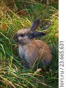 Маленький кролик на лугу среди парка. Стоковое фото, фотограф Писаревский Владислав / Фотобанк Лори