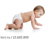 Купить «pretty crawling baby isolated», фото № 23665899, снято 13 декабря 2013 г. (c) Оксана Кузьмина / Фотобанк Лори