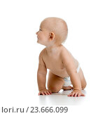 Купить «funny crawling baby boy isolated on white background», фото № 23666099, снято 6 сентября 2014 г. (c) Оксана Кузьмина / Фотобанк Лори