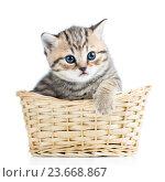 Купить «Cute small kitten in wicker basket», фото № 23668867, снято 17 декабря 2013 г. (c) Оксана Кузьмина / Фотобанк Лори
