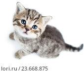 Купить «top view of baby cat kitten on white background», фото № 23668875, снято 17 декабря 2013 г. (c) Оксана Кузьмина / Фотобанк Лори
