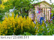 Купить «Летний пейзаж. Дача в цветах», фото № 23690511, снято 2 июля 2016 г. (c) Sergei Gushchin / Фотобанк Лори