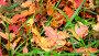 Wet yellow maple leaf lying on bright green grass in autumn, видеоролик № 23712751, снято 5 октября 2016 г. (c) Володина Ольга / Фотобанк Лори