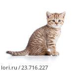 cute cat kitty isolated on white. Стоковое фото, фотограф Оксана Кузьмина / Фотобанк Лори