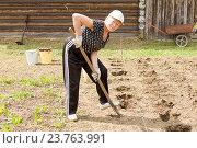 Купить «Позитивная пожилая дачница копает лунки для посадки картофеля», фото № 23763991, снято 20 мая 2016 г. (c) Лариса Капусткина / Фотобанк Лори