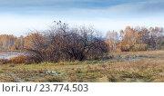 Вороны на дереве в осеннее утро. Стоковое фото, фотограф Константин Мезенцев / Фотобанк Лори