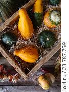 Декоративные тыквы в деревянной коробке. Стоковое фото, фотограф Наталья Майорова / Фотобанк Лори