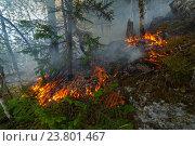 Купить «Лесной пожар.», фото № 23801467, снято 1 сентября 2016 г. (c) Акиньшин Владимир / Фотобанк Лори