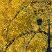 Петербургский фонарь на фоне осенних деревьев, эксклюзивное фото № 23816883, снято 18 октября 2014 г. (c) Александр Алексеев / Фотобанк Лори