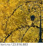 Купить «Петербургский фонарь на фоне осенних деревьев», эксклюзивное фото № 23816883, снято 18 октября 2014 г. (c) Александр Алексеев / Фотобанк Лори
