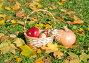 Дачный урожай,тыква и яблоки, эксклюзивное фото № 23820347, снято 16 октября 2016 г. (c) Svet / Фотобанк Лори