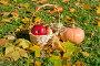 Осенний натюрморт в солнечный осенний день на траве, эксклюзивное фото № 23820351, снято 16 октября 2016 г. (c) Svet / Фотобанк Лори