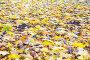 Яркие опавшие листья лежат на земле, фото № 23858819, снято 10 октября 2016 г. (c) Дудакова / Фотобанк Лори