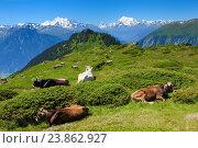 Купить «Swiss Alps, Mischabel, Matterhorn, Weisshorn, Valais, Switzerland», фото № 23862927, снято 16 июля 2016 г. (c) age Fotostock / Фотобанк Лори