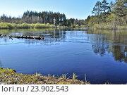 Купить «Лесная река в Мещере весной», фото № 23902543, снято 7 мая 2013 г. (c) Сергей Дрозд / Фотобанк Лори