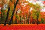 Осенний пейзаж, яркий красочный парк с красными опавшими листьями, фото № 23925059, снято 3 октября 2016 г. (c) Зезелина Марина / Фотобанк Лори