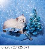 Купить «Сибирский котенок c новогодней елкой, новогодняя тема для открытки», фото № 23925071, снято 10 января 2016 г. (c) ElenArt / Фотобанк Лори