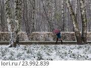 Купить «Женщина идет с зонтиком во время первого снегопада в осеннем парке города Москвы, Россия», фото № 23992839, снято 29 октября 2016 г. (c) Николай Винокуров / Фотобанк Лори
