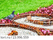 Купить «Голуби на цветнике в Лефортовском парке», эксклюзивное фото № 23996559, снято 3 июля 2015 г. (c) Алёшина Оксана / Фотобанк Лори