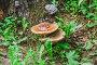 Переросшие пластинчатые грибы на стволе дерева, эксклюзивное фото № 23996579, снято 3 июля 2015 г. (c) Алёшина Оксана / Фотобанк Лори