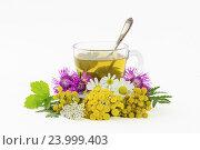 Купить «Отвар из целебных трав в чашке», фото № 23999403, снято 2 августа 2016 г. (c) Дмитрий Тищенко / Фотобанк Лори