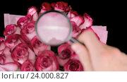 Исследование роз под увеличительным стеклом. Стоковое видео, видеограф Video Kot / Фотобанк Лори