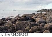 Купить «Морской котик на каменистом берегу», фото № 24039363, снято 7 октября 2016 г. (c) Евгений Дробитько / Фотобанк Лори