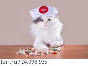Кошка в костюме доктора дает лекарство. Стоковое фото, фотограф Светлана Валуйская / Фотобанк Лори