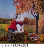 Купить «Кошка на фоне осеннего пейзажа», фото № 24098951, снято 19 августа 2016 г. (c) Светлана Валуйская / Фотобанк Лори