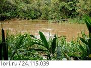 Forest, Nature, Serra do Mar State park, Núcleo Santa Virgínia, São Paulo, Brazil. Стоковое фото, фотограф Laurent Guerinaud / age Fotostock / Фотобанк Лори