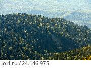 Купить «Горный осенний лес», фото № 24146975, снято 1 октября 2016 г. (c) Виталий Батанов / Фотобанк Лори