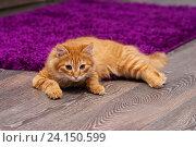 Купить «Красивый рыжий котенок», фото № 24150599, снято 6 ноября 2016 г. (c) Наталья Быстрая / Фотобанк Лори