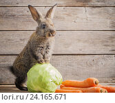 Купить «funny rabbit with vegetables on wooden background», фото № 24165671, снято 15 мая 2016 г. (c) Майя Крученкова / Фотобанк Лори