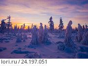 Купить «Зимний пейзаж с закатом и деревьями», фото № 24197051, снято 4 января 2015 г. (c) Оксана Владимировна Грачева / Фотобанк Лори