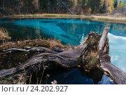 Небольшое голубое озеро в лесу на Алтае, Россия, фото № 24202927, снято 27 сентября 2016 г. (c) Liseykina / Фотобанк Лори