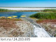 Купить «Озеро Эльтон. Волгоградская область», фото № 24203695, снято 11 июня 2015 г. (c) Валерий Смирнов / Фотобанк Лори