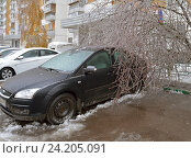 Купить «Последствия ледяного дождя. Дерево под тяжестью ледяной корки упало на обледенелый легковой автомобиль. Митино», фото № 24205091, снято 11 ноября 2016 г. (c) Валерия Попова / Фотобанк Лори
