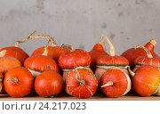 Декоративные тыквы. Стоковое фото, фотограф Глыцко Андрей / Фотобанк Лори