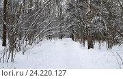 Купить «Деревья в снегу зимой», видеоролик № 24220127, снято 15 ноября 2016 г. (c) Антон Гвоздиков / Фотобанк Лори