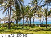 Купить «Пальмы на берегу Южно-Китайского моря. Курорт DocLet Beach Resort. Вьетнам», фото № 24230843, снято 2 июня 2016 г. (c) Владимир Сергеев / Фотобанк Лори