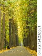 Купить «Осенний парк», фото № 24232631, снято 1 октября 2016 г. (c) Алексей Назаров / Фотобанк Лори