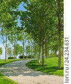 Купить «Благоустроенная зеленая зона на набережной города Новороссийска с вымощенными плиткой аллеями и молодыми платанами», фото № 24234631, снято 8 мая 2016 г. (c) Наталья Гармашева / Фотобанк Лори