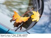 Купить «close up of car wiper with autumn leaves», фото № 24236607, снято 12 октября 2016 г. (c) Syda Productions / Фотобанк Лори