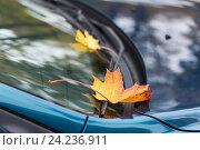 Купить «close up of car wiper with autumn leaves», фото № 24236911, снято 12 октября 2016 г. (c) Syda Productions / Фотобанк Лори